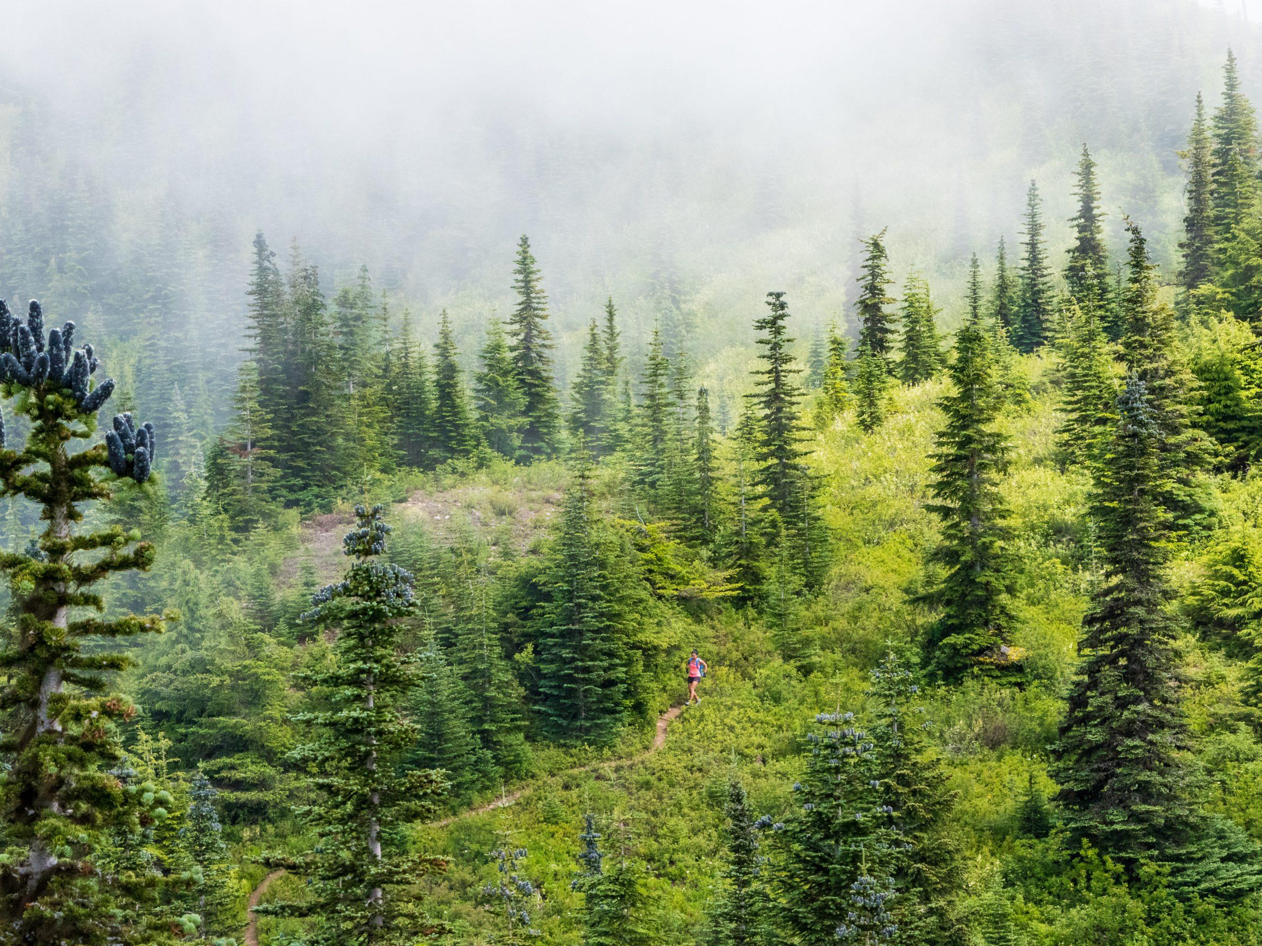 Trail Nature Ecole de Trail